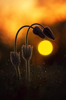 Fotografie - Pri západe slnka - 8244184_