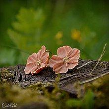 Náušnice - Lososové kvety - náušnice - 8249158_