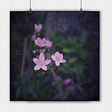 Grafika - RUŽOVÁ NEZNÁMA kvetinka - 8254383_