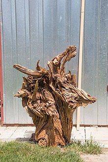 Socha - Borovicové dekoračné skulptúry - korene - 8253024_