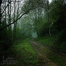 Obrazy - ĎALŠIE HMLISTÉ RÁNO  fotoplátno 60x60 cm - 8272787_