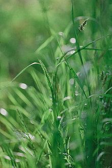 Grafika - Vôňa letnej rosy - 8272512_