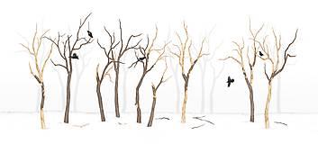Grafika - RAVEN IN FOREST - 8292532_