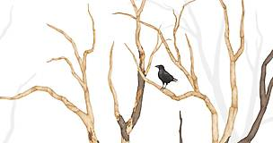 Grafika - RAVEN IN FOREST - 8292537_