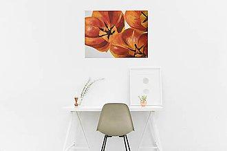 Obrazy - Magic tulips - 8309050_