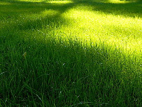 Fotografie - Na lúčke zelenej III. - 8315779_