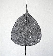 Kresby - Bodhi Tree (A3)  - 8322486_
