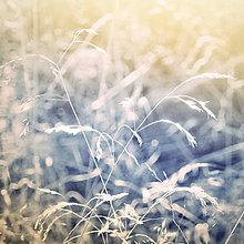 Fotografie - sen I - 8324534_