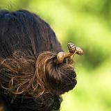 Ozdoby do vlasov - Hadie tajomstvo - ihlice do vlasov - 8333590_