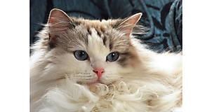 Obrazy - Mačička - maľba akvarelom a pastelom - 8339652_