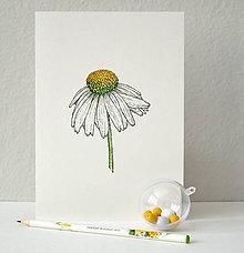 Kresby - Echinacea - A5 - 8369235_