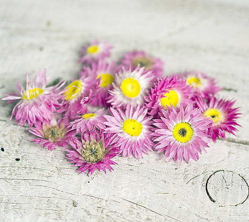 Suroviny - Sušené kvety - slamihovky - 8379373_