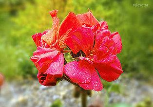 Fotografie - Ohnivý kvet - 8393730_