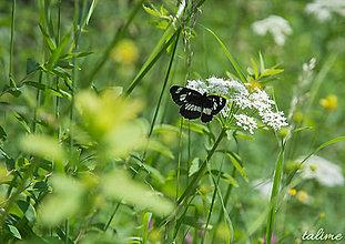 Fotografie - Butterfly I. - 8396340_