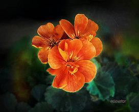 Fotografie - (ne)pomarančové kvety - 8415564_