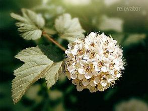 Fotografie - Unesené kvety - 8425822_