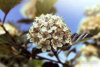 Fotografie - Oslobodené kvety - 8428558_