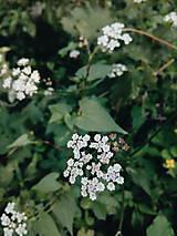Fotografie - Na potulkách prírodou  - 8429383_