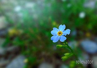 Fotografie - Nezabudnem - 8436847_