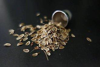 Potraviny - semienka kôpru na siatie- malé balenie - 8439853_