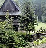 Fotografie - v lese - 8437815_