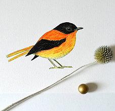 Kresby - Muchárik čierno-oranžový - 8442328_