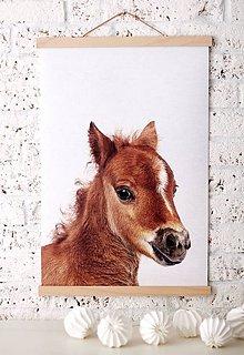 Grafika - Print na plátne HORSE A2 farebná verzia - 8467329_