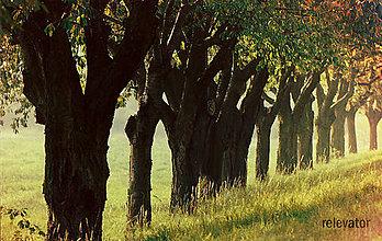 Fotografie - Cesta k jeseni - 8482355_