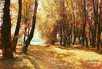 Fotografie - Jesenný kuk :) - 8486939_