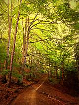 Grafika - Cesta do hlbín lesnej duše - 8490967_
