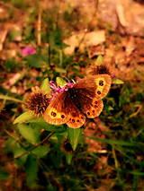 Grafika - Pán Motýľ - 8493771_