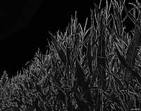 Grafika - Čiernočierna tma - 8498836_