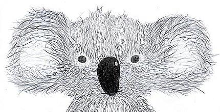 Kresby - Koala - 8497496_