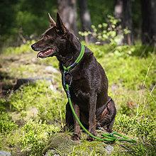 Pre zvieratká - Lanový obojok AKAI - pevný // matrix - 8507255_