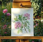 Obrázky - Hortenzia, tlač vo veľkosti A4 - 8517324_