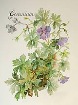 Obrazy - Pakost - Geranium, tlač vo veľkosti A4 - 8517332_