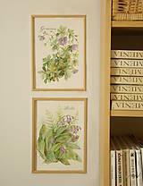 Obrazy - Pakost - Geranium, tlač vo veľkosti A4 - 8517335_