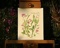 Obrazy - Hrachor - Lathyrus, tlač vo veľkosti A4 - 8536272_