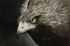 Obrazy - Golden eagle - Zlatý orol - 8538263_