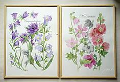 Obrazy - Botanický obrázok Zvončekovité - Campanuloideae, tlač vo veľkosti A4 - 8548297_