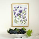 Obrazy - Botanický obrázok Zvončekovité - Campanuloideae, tlač vo veľkosti A4 - 8548459_