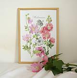 - Botanický obrázok Slezovité - Malvaceae, tlač vo veľkosti A4 - 8548484_