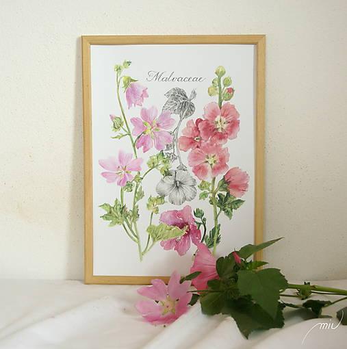 Botanický obrázok Slezovité - Malvaceae, tlač vo veľkosti A4