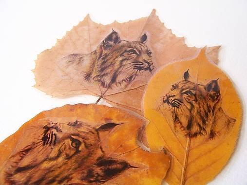 Záložka : Rysie: Zvieratá v listoch ukryté