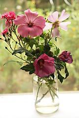 Obrazy - Botanický obrázok Slezovité - Malvaceae, tlač vo veľkosti A4 - 8550602_