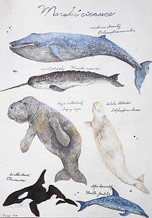 Kresby - Morské cicavce - plagát - 8550731_