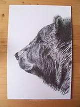 Kresby - Kresba : Medveď - Maco - 8555280_