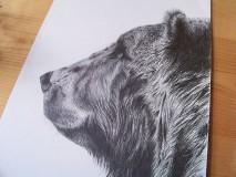 Kresby - Kresba : Medveď - Maco - 8555281_