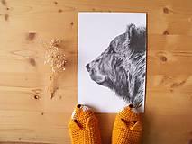 Kresby - Kresba : Medveď - Maco - 8555287_