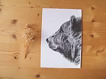 Kresby - Kresba : Medveď - Maco - 8555288_